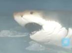Megalodon found in Battlefield 4