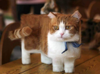 Mojang wants to add your cute cat to Minecraft